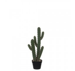 cactus in plastic pot groen