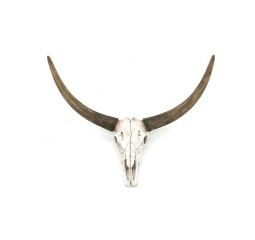 by-boo 6501 ox head skull
