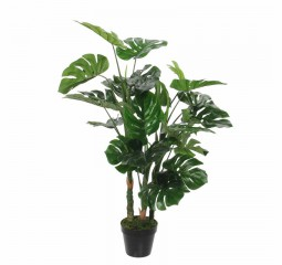 monstera in pot groen